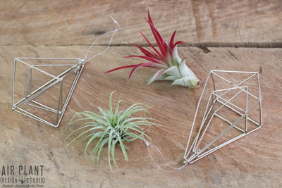 geometric tillandsia air plant ornaments