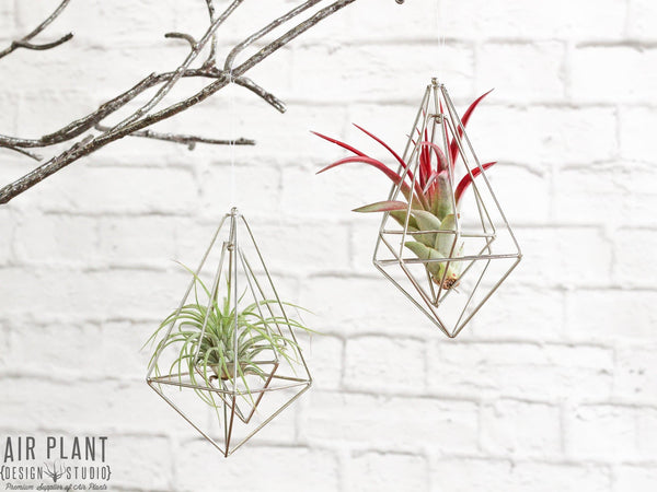 Modern Air Plant Ornaments