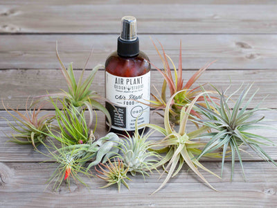 Air Plant Starter Kit - 10 Plants & Fertilizer