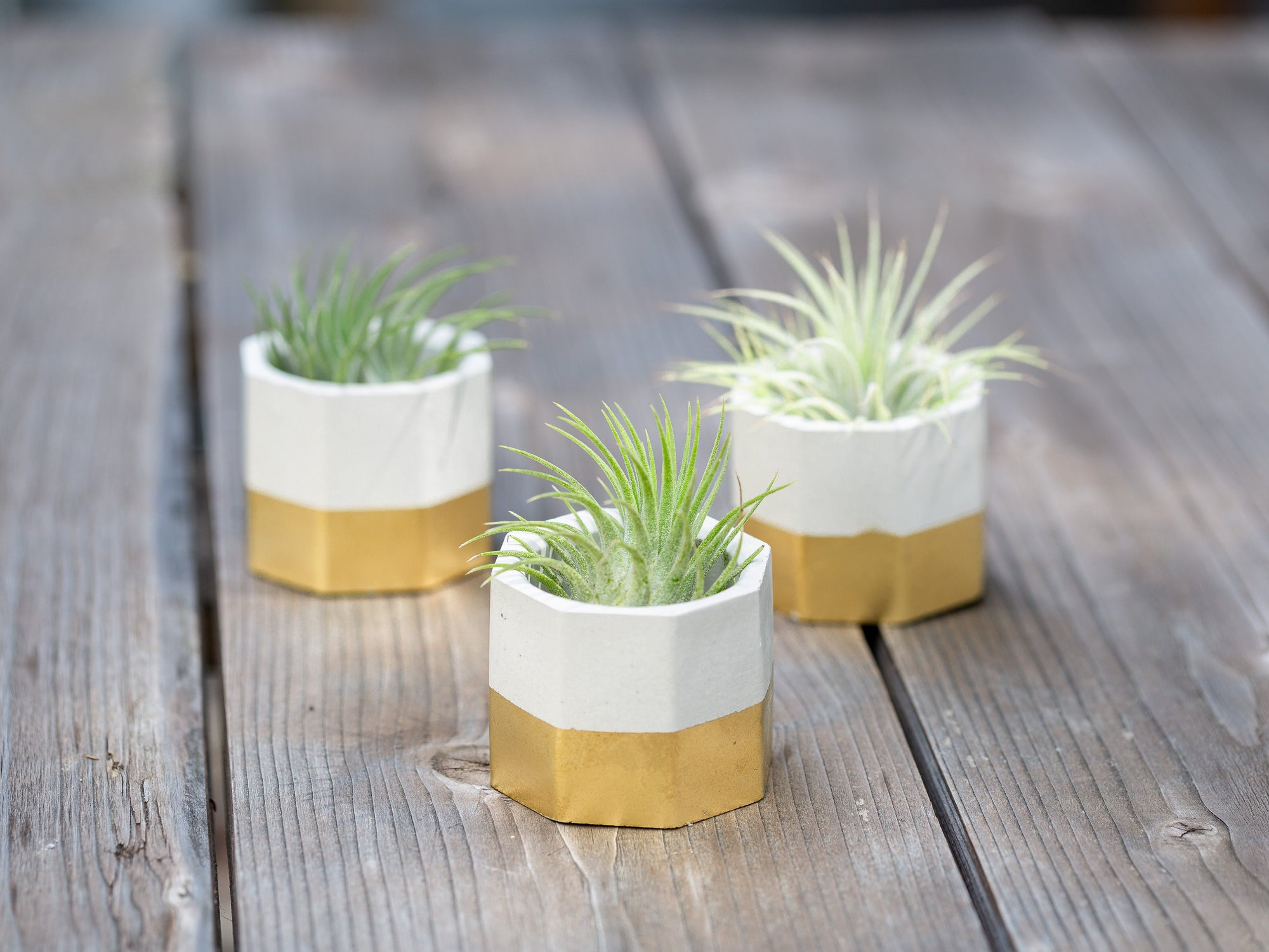 Modern geometric gold Tillandsia air plant holders