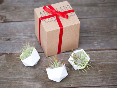 geometric tillandsia air plant holders gift boxed