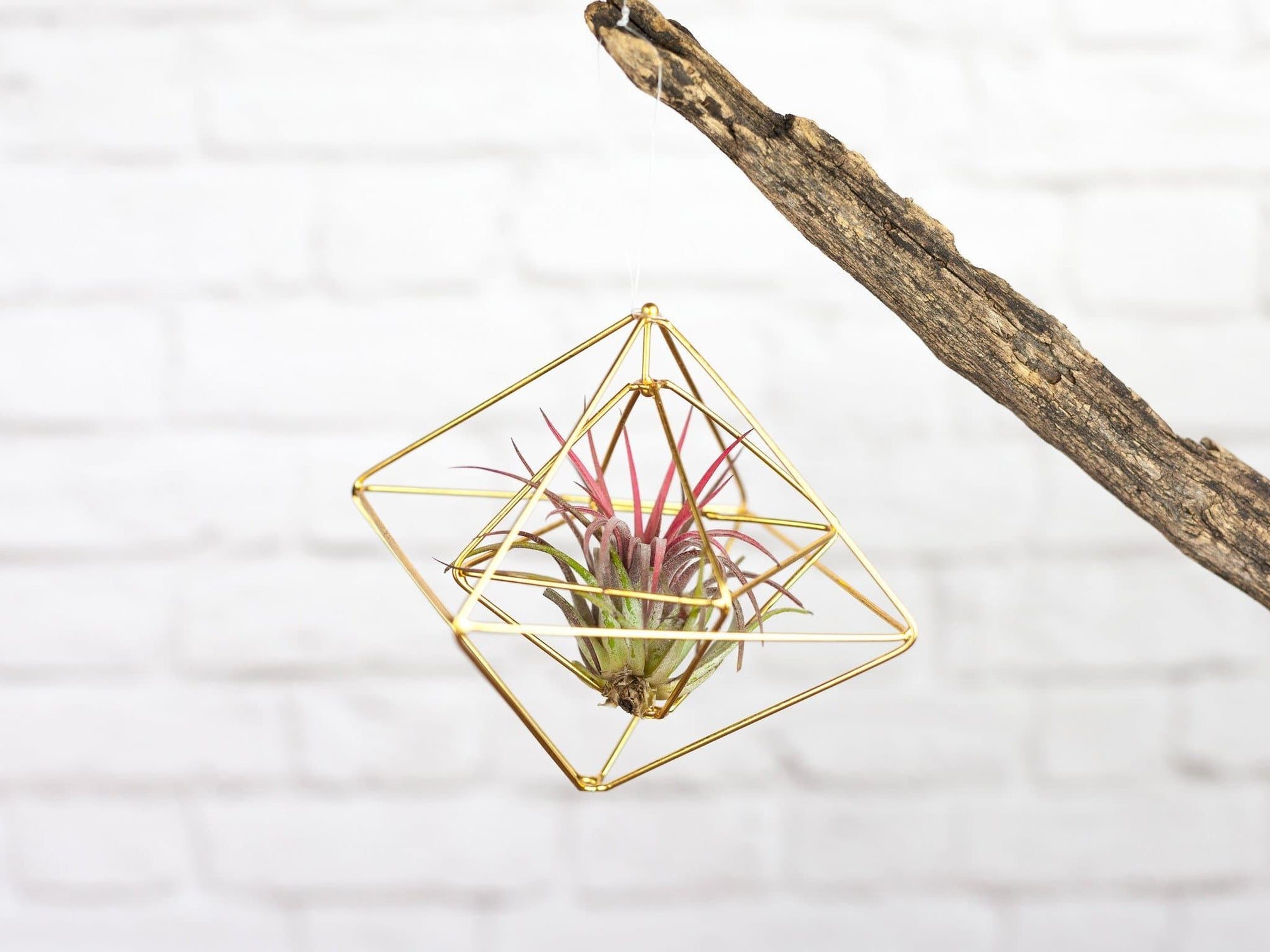 gold geometric tillandsia air plant ornament