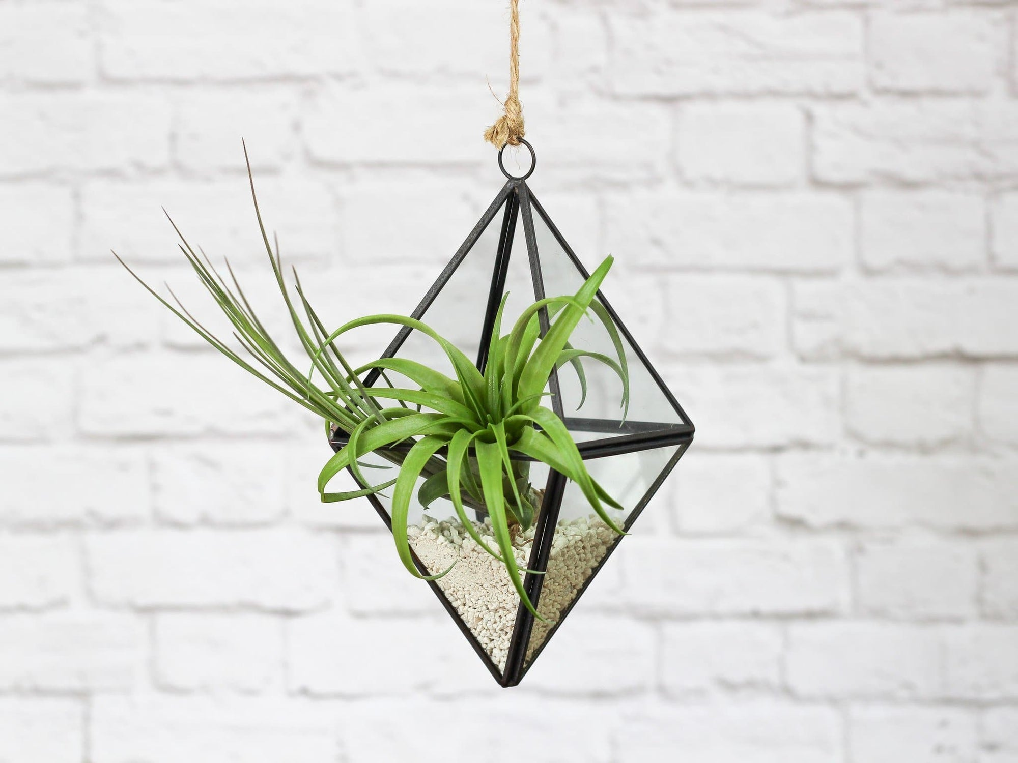 Hanging Geometric Air Plant Terrarium