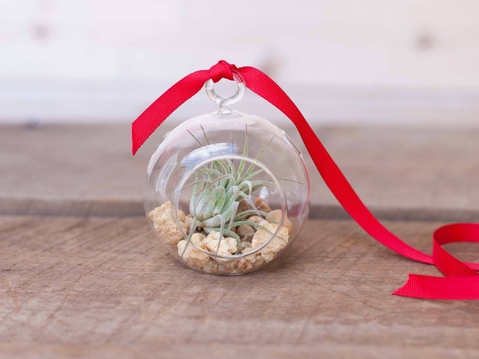 Mini Air Plant Terrarium Ornament - River Rock | Air Plant Design Studio