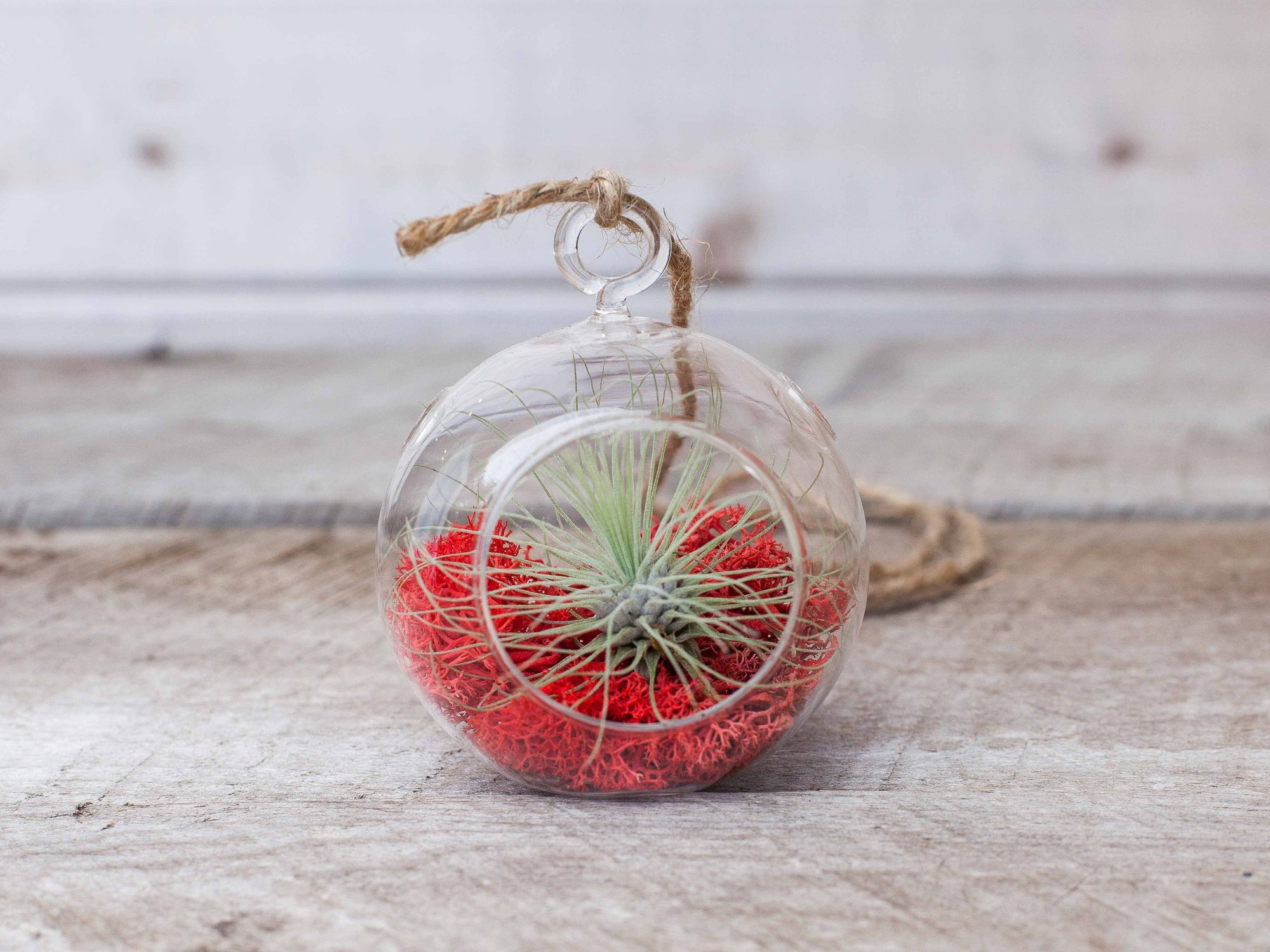 mini glass tillandsia air plant terrarium