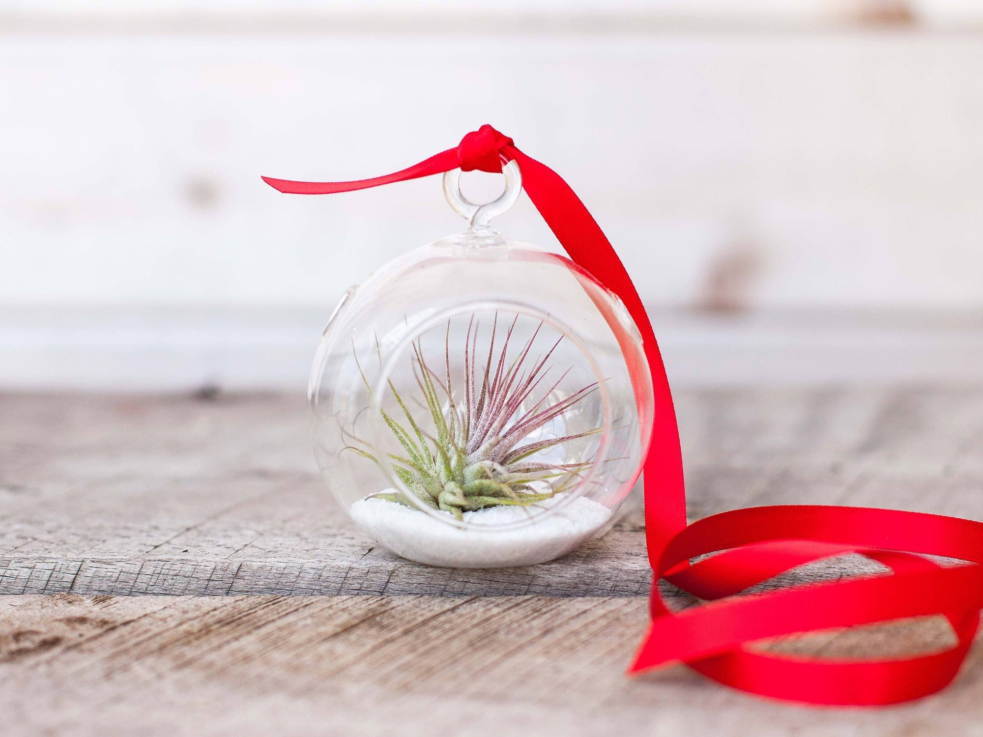 mini glass tillandsia ionantha air plant terrarium with sand