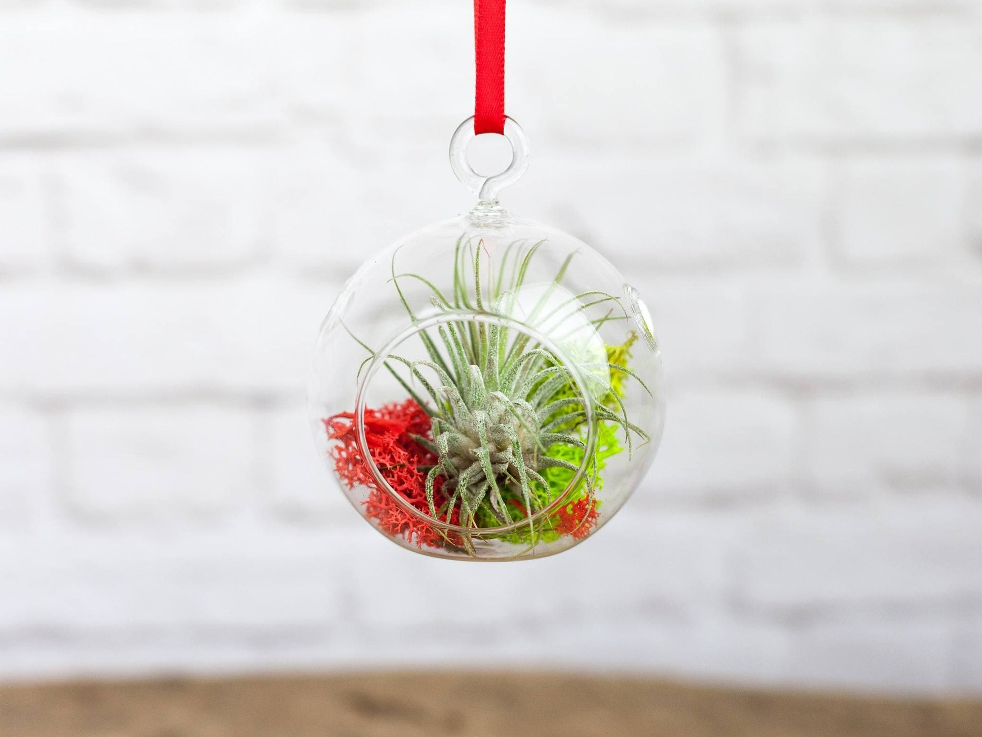 Mini air plant terrarium ornament design studio