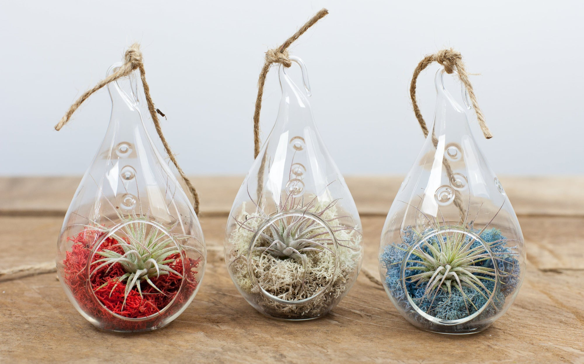 Wholesale Teardrop Terrarium kit + Air Plant