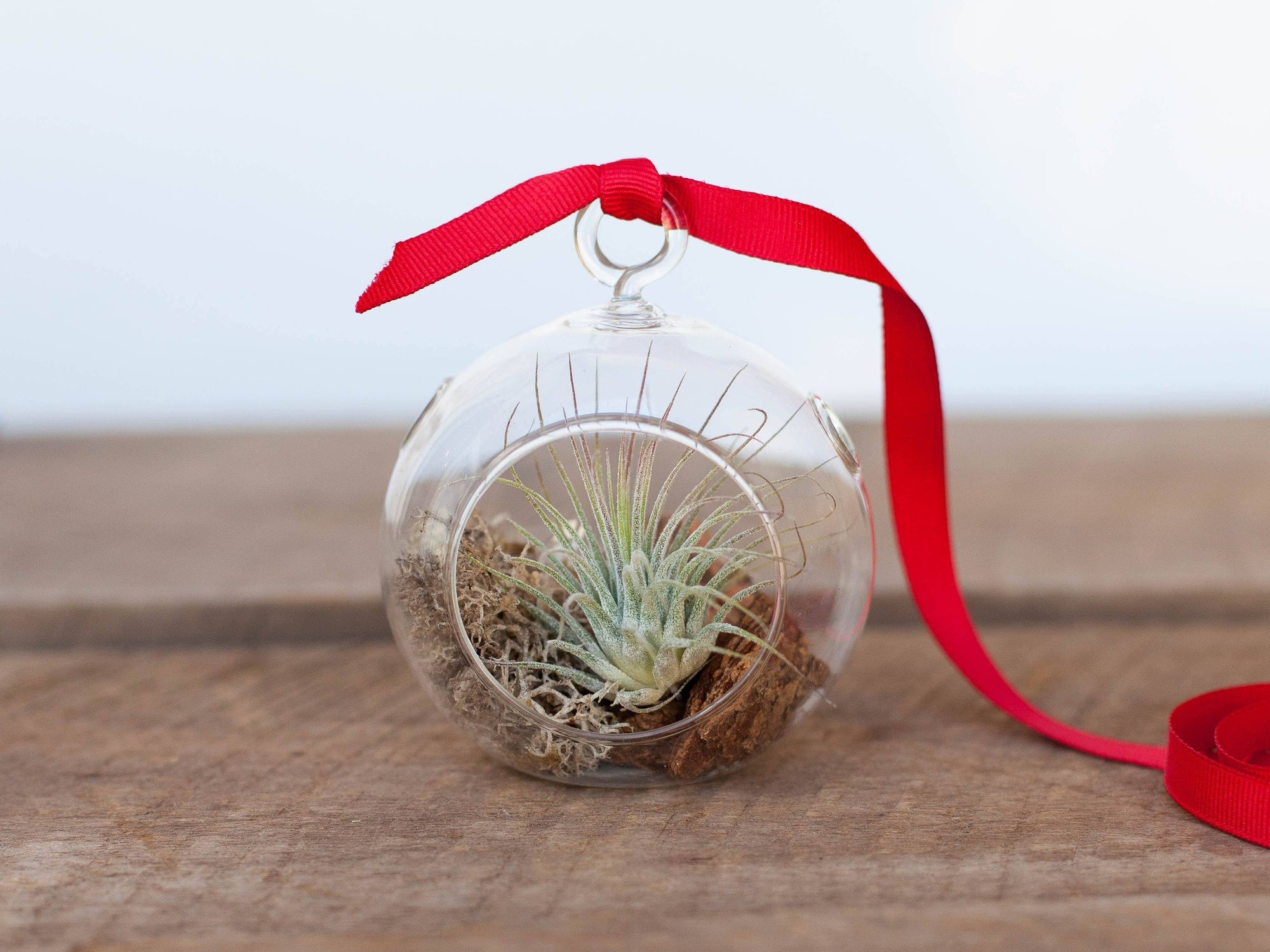Mini Air Plant Terrarium Ornament - Rustic | Air Plant Design Studio