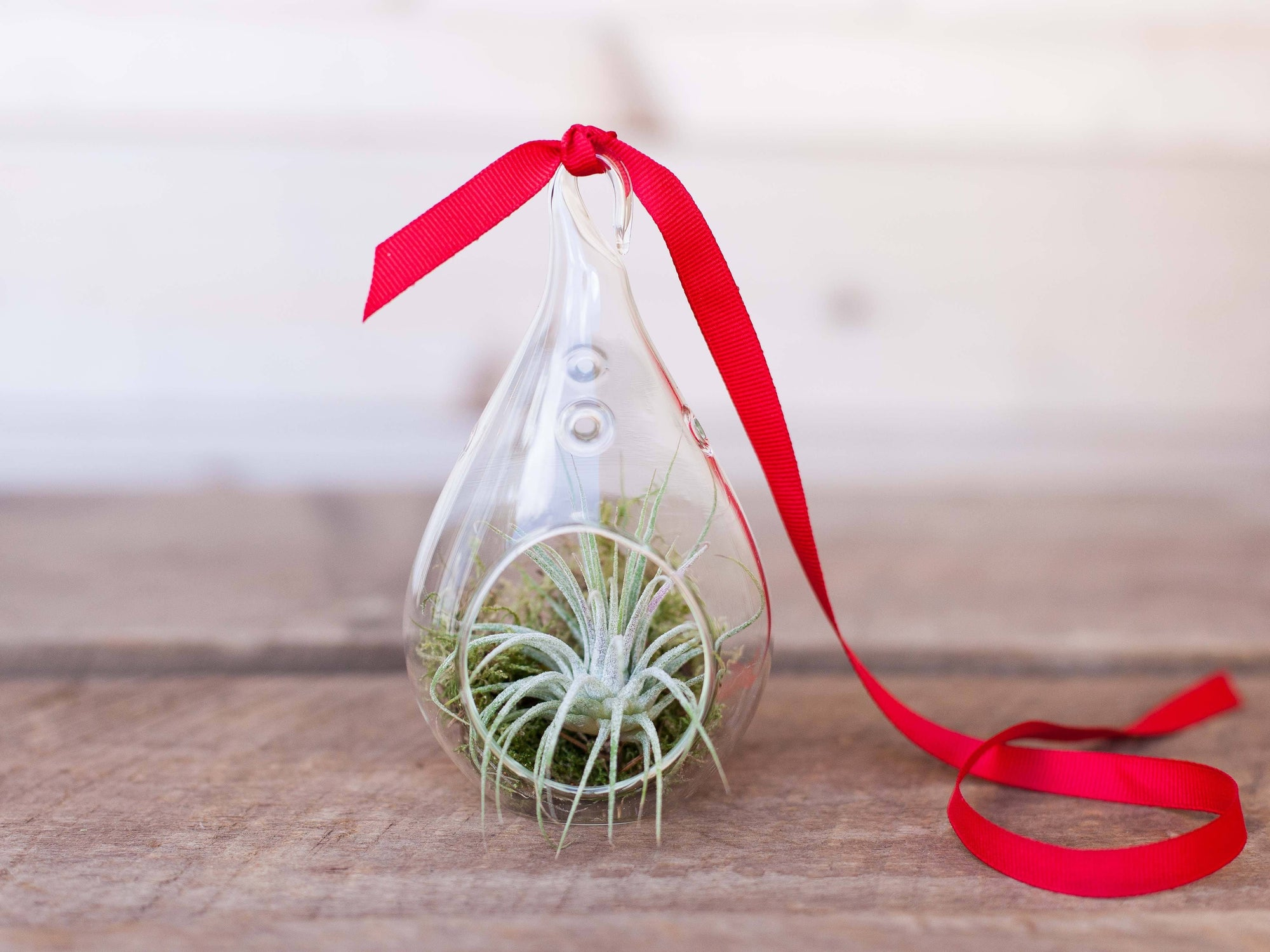 Teardrop Air Plant Terrarium from Air Plant Design Studio