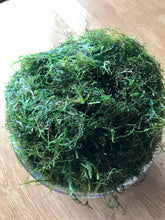 Load image into Gallery viewer, Golf Ball Portion of Java Moss