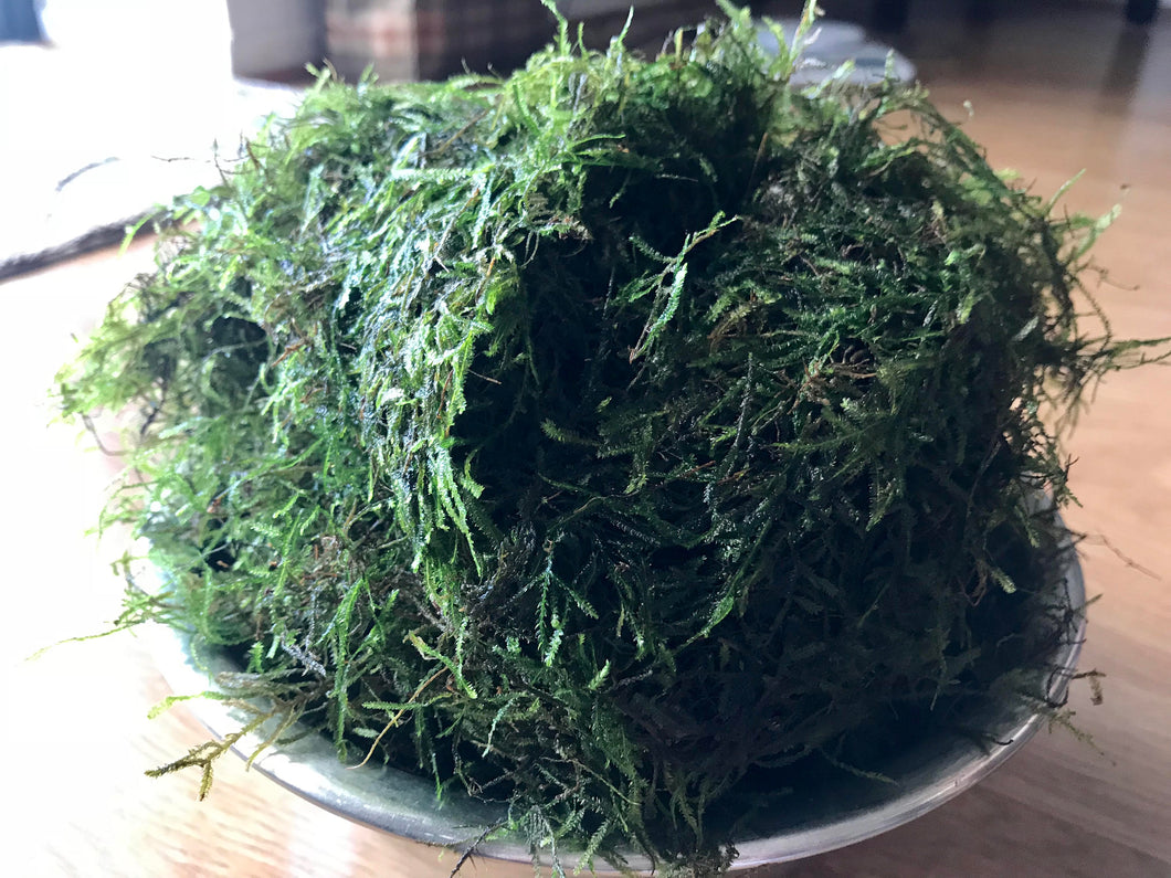 Golf Ball Portion of Java Moss