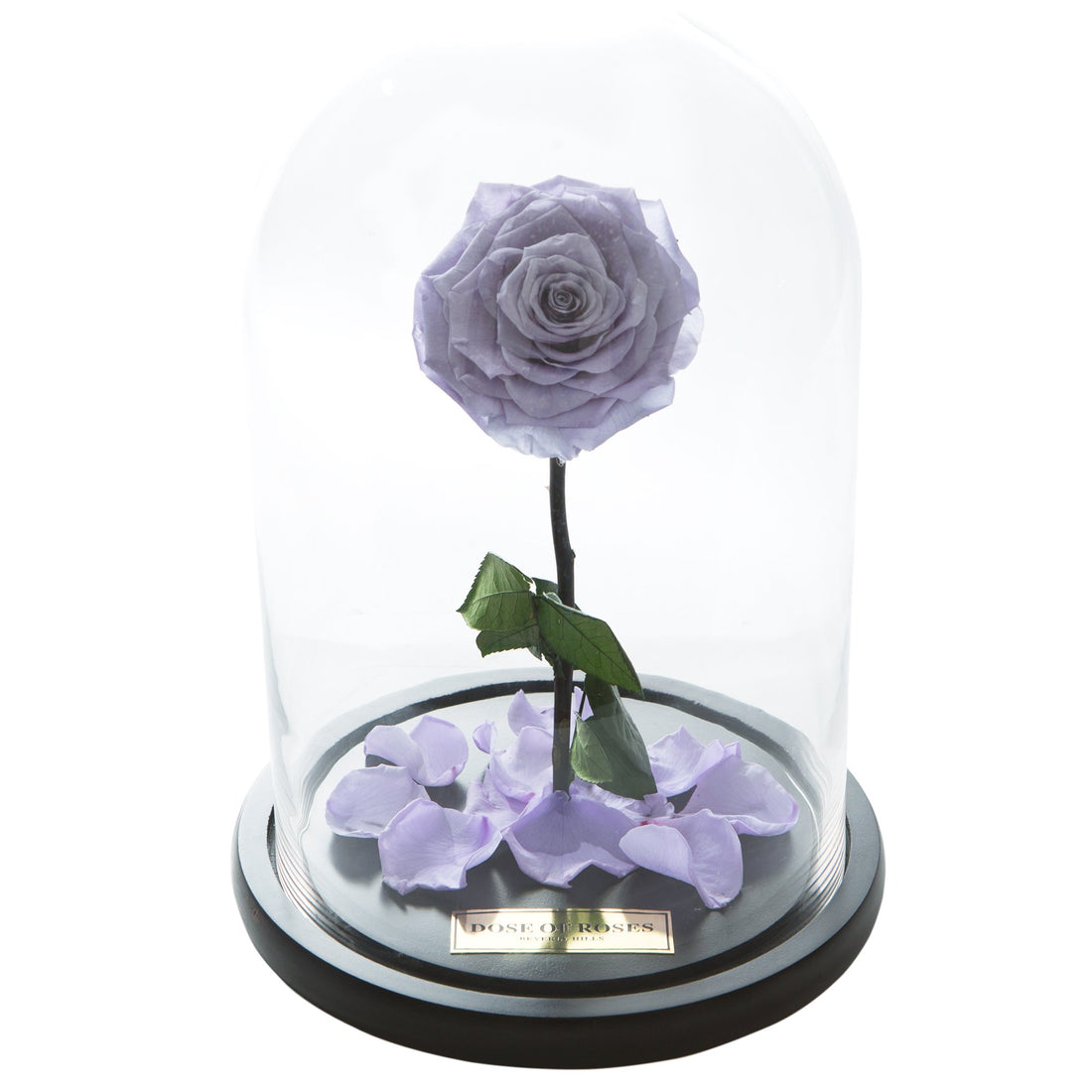 Purple Forbidden Rose in Glass Dome