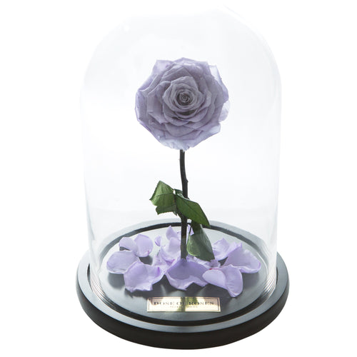 Dose of Roses - The Forbidden Rose – Purple -