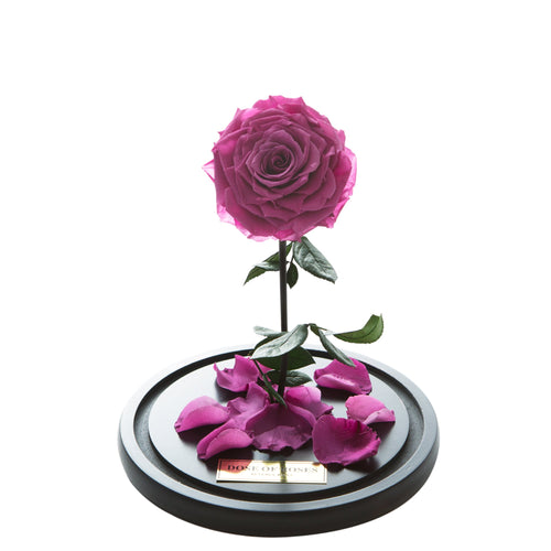 Dose of Roses - The Forbidden Rose – Magenta -