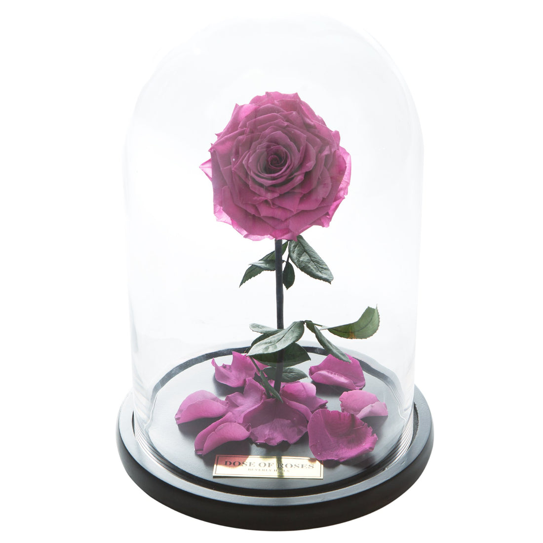 Magenta Forbidden Rose in Glass Dome
