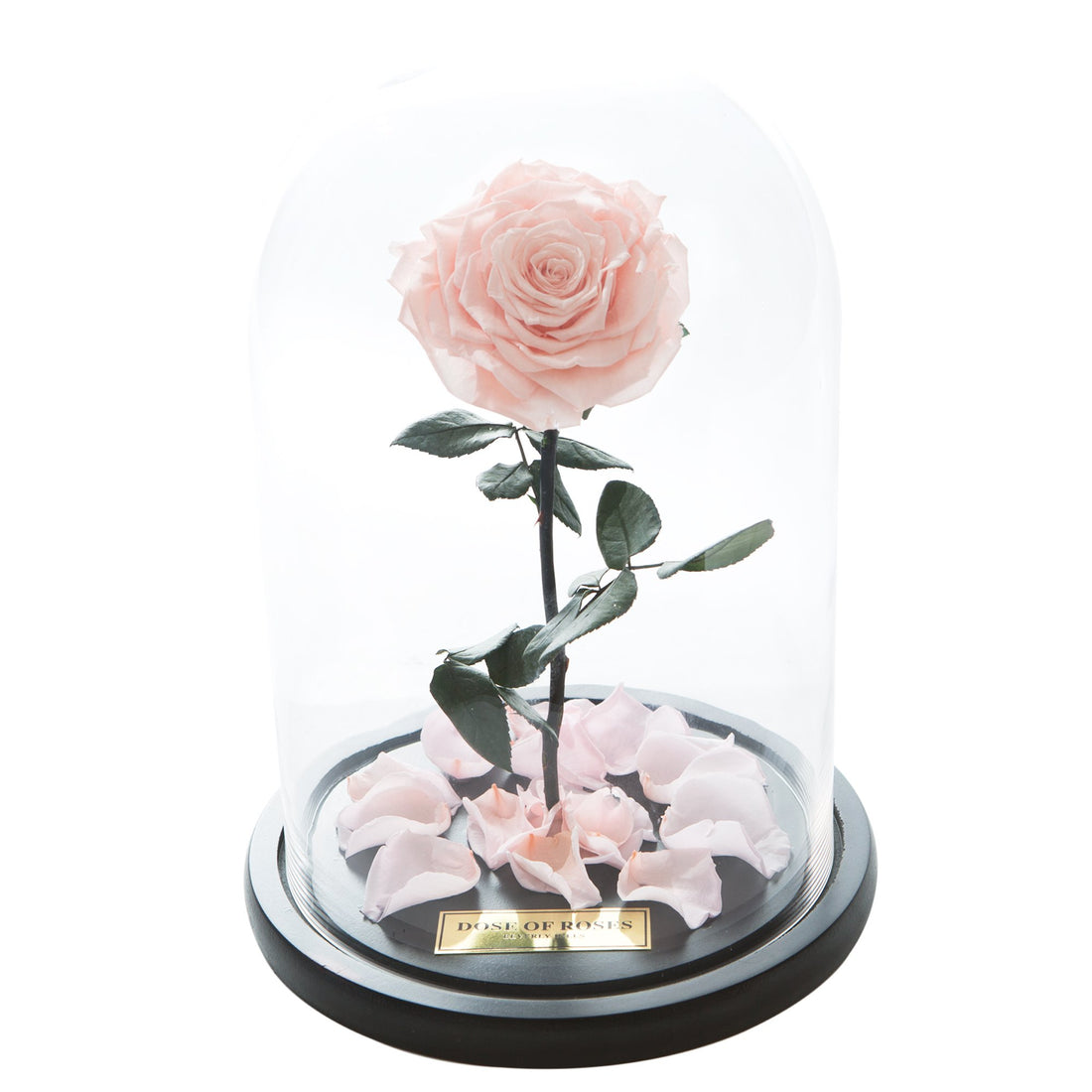 Peach Forbidden Rose in Glass Dome