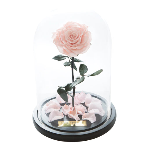 Dose of Roses - The Forbidden Rose – Peach -