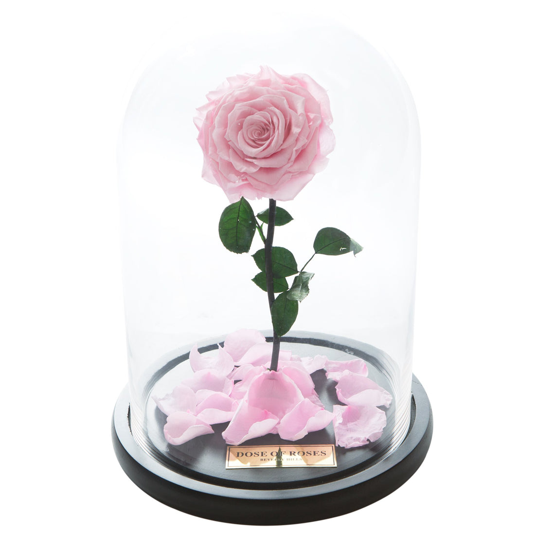 Pink Forbidden Rose in Glass Dome