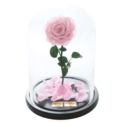 Dose of Roses - The Forbidden Rose – Pink -