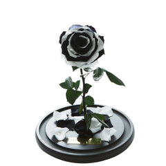 Black & White Forbidden Rose