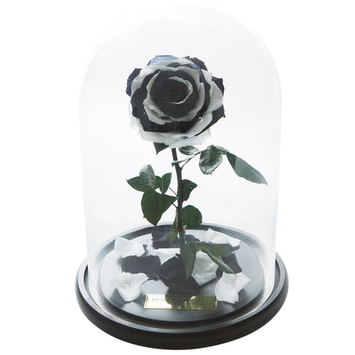 Dose of Roses - The Forbidden Rose – Black & White -