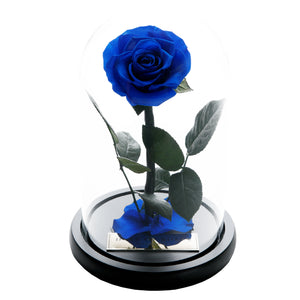 The Forbidden Rose – Royal Blue