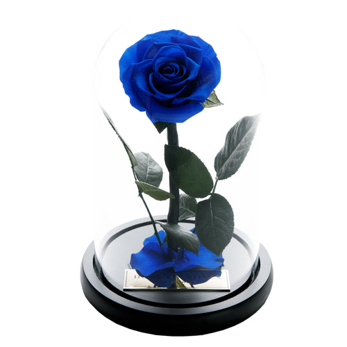 Dose of Roses - The Forbidden Rose – Royal Blue -