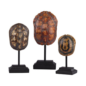 Set Of 3 Turtle Shells On Stands Natural Accessories