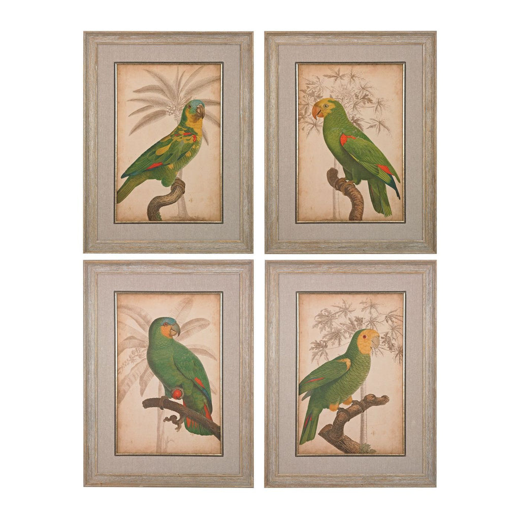 Parrot And Palm I Ii Iii Iv - Fine Art Giclee Under Glass Washed Wood