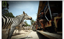 Load image into Gallery viewer, Chiang Mai Night Safari Ticket