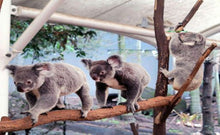 Load image into Gallery viewer, Currumbin Wildlife Sanctuary