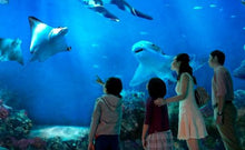 Load image into Gallery viewer, S.E.A. Aquarium Ticket Sentosa, Singapore