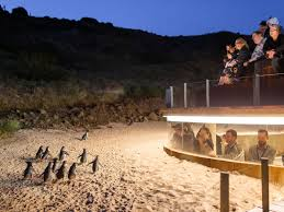 Discounted Phillip Island Penguin Parade Day Tour Deal