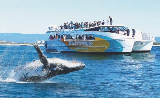 gold coast whale watch