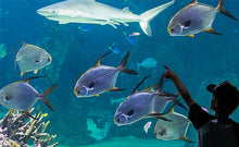 Load image into Gallery viewer, Cheap Discounted Sea Life Sydney Aquarium Instant E-Ticket Deals