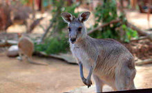 Load image into Gallery viewer, Wild Life Sydney Zoo Entry Ticket