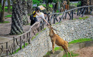 Khao Kheow Open Zoo Ticket