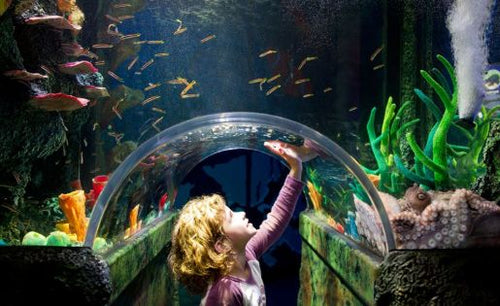 Cheap Discounted Melbourne Sea Life Aquarium & Legoland Discovery Centre E-Ticket (Bar Code Direct Entry)