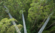 Load image into Gallery viewer, Cheap Discounted Otway Fly Zipline Tour - Melbourne