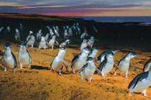 Load image into Gallery viewer, Discounted Phillip Island Penguin Parade Day Tour Deal - Melbourne