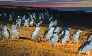 Cheap Discounted - Phillip Island Day Tour with Penguin Parade