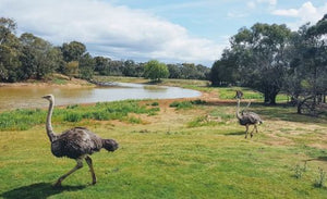 Cheap Discounted Werribee Open Range Zoo Entry Ticket