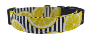 Lemonade Dog Collar - Collars by Design