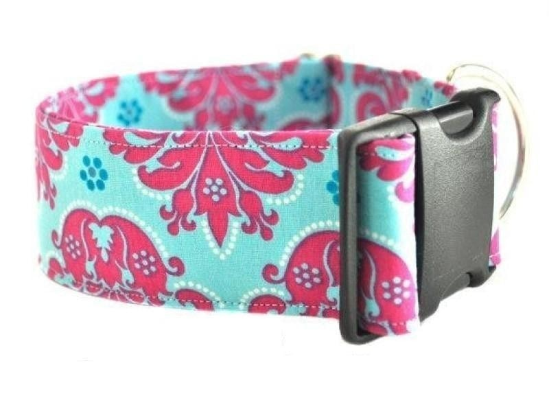 "Upgrade to a 2"" Width Collar - Collars by Design"
