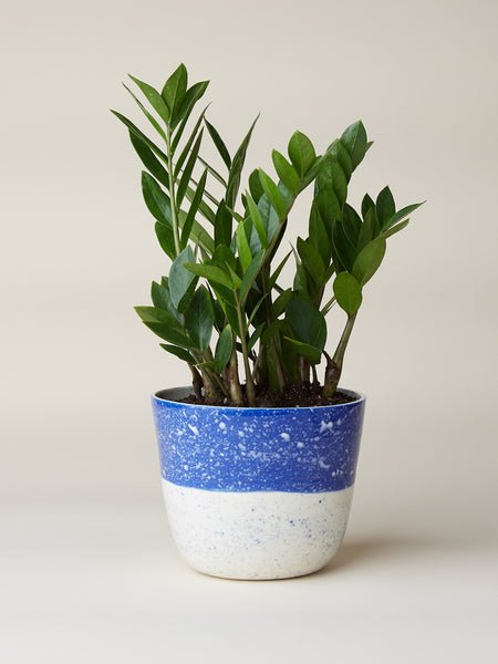 "Porcelain planter thrown on the wheel and hand painted with speckled pattern. Measures approximately 6"" tall and 7"" wide. Handmade in LA.  btw Ceramics is a housewares company founded in Brooklyn and made in LA.  The handmade porcelain goods are designed by Brooke T. Winfrey to enliven and enrich your table and home."