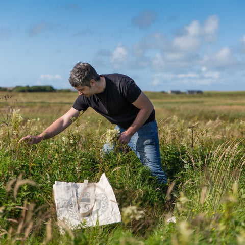 Foraging in-season local meadowsweet
