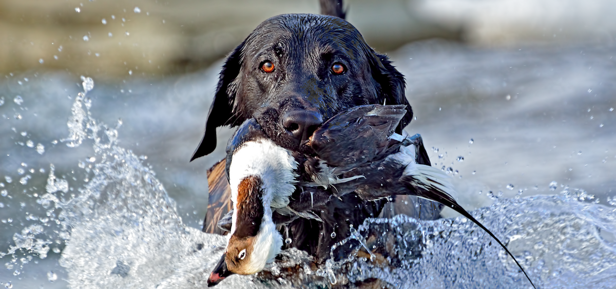 Canadian Waterfowl Supplies Decoys And Gear For Marsh