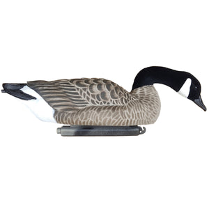 Dakota Xtreme Lesser Searcher