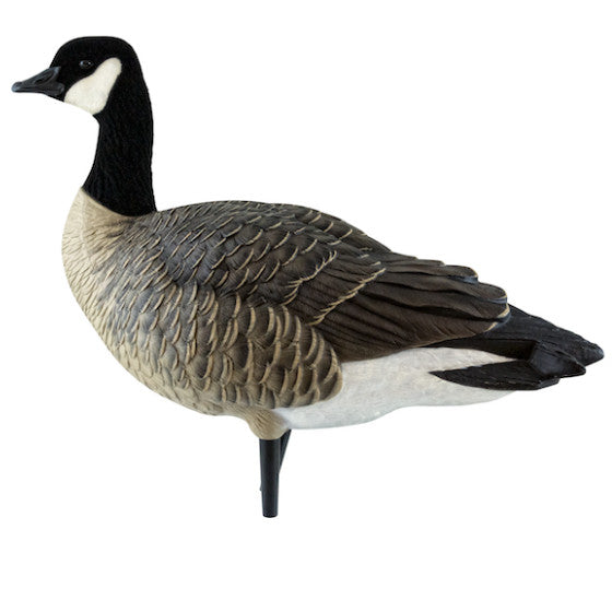 avian x axp active lesser canada goose decoys canadian waterfowl